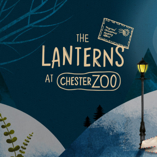 Lanterns at Chester Zoo with Wild Rumpus