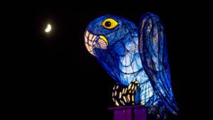 Chester Zoo lanterns 2