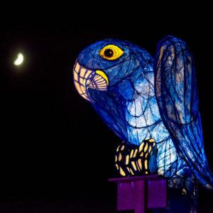 Chester Zoo Lanterns